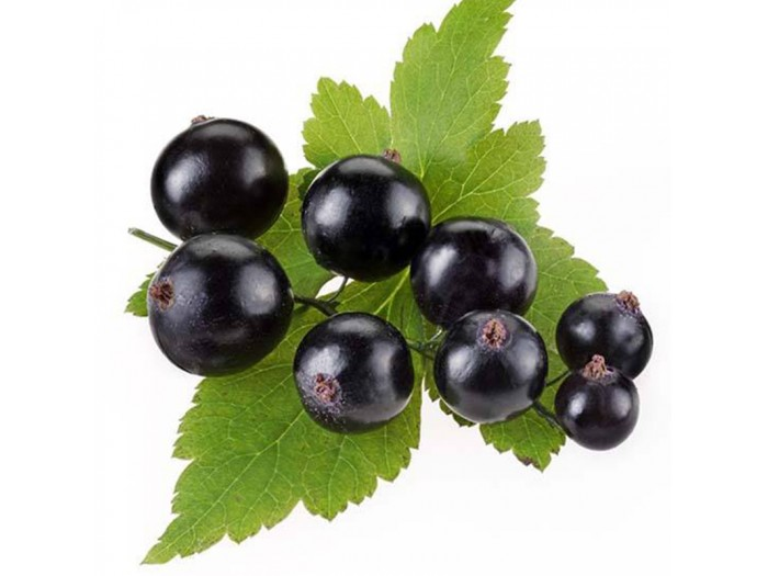 IQF Blackcurrant