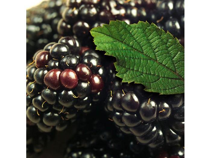 IQF blackberry