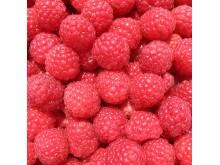 IQF Raspberry